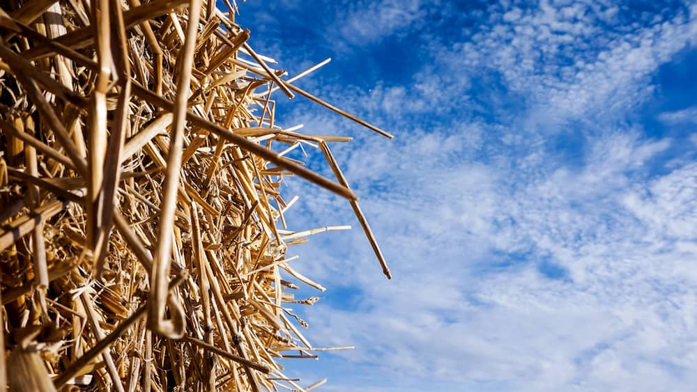 Straw bale to illustrate Tulse Hill Church build